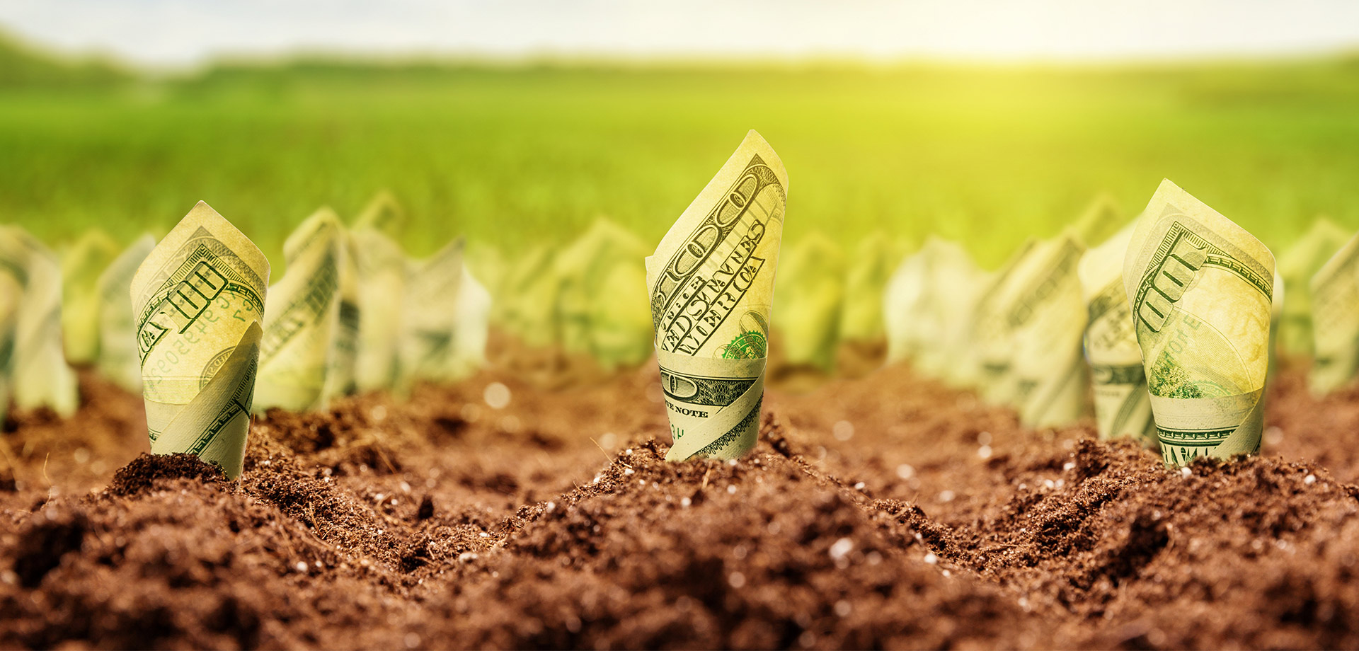 Background - Money Growing in field